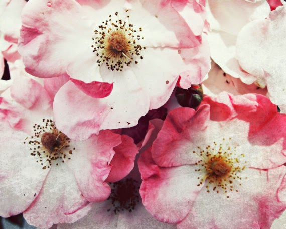 vintage roses photograph by Lupen Grainne