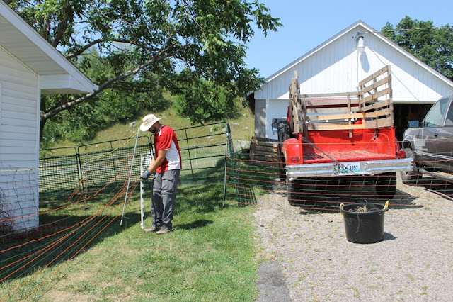 Setting up the netting laneway