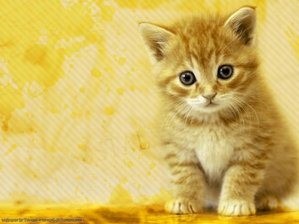 http://4.bp.blogspot.com/-zqglDUWq_Wg/T-bFQ-AEWwI/AAAAAAAAGUE/n1MdE2F3S7g/s1600/Cat-wallpaper-39.jpg