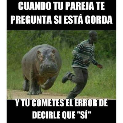 Foto divertida un hipopotamo siguiendo a un hombre
