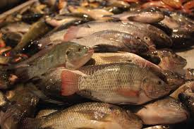 Ikan Mujair