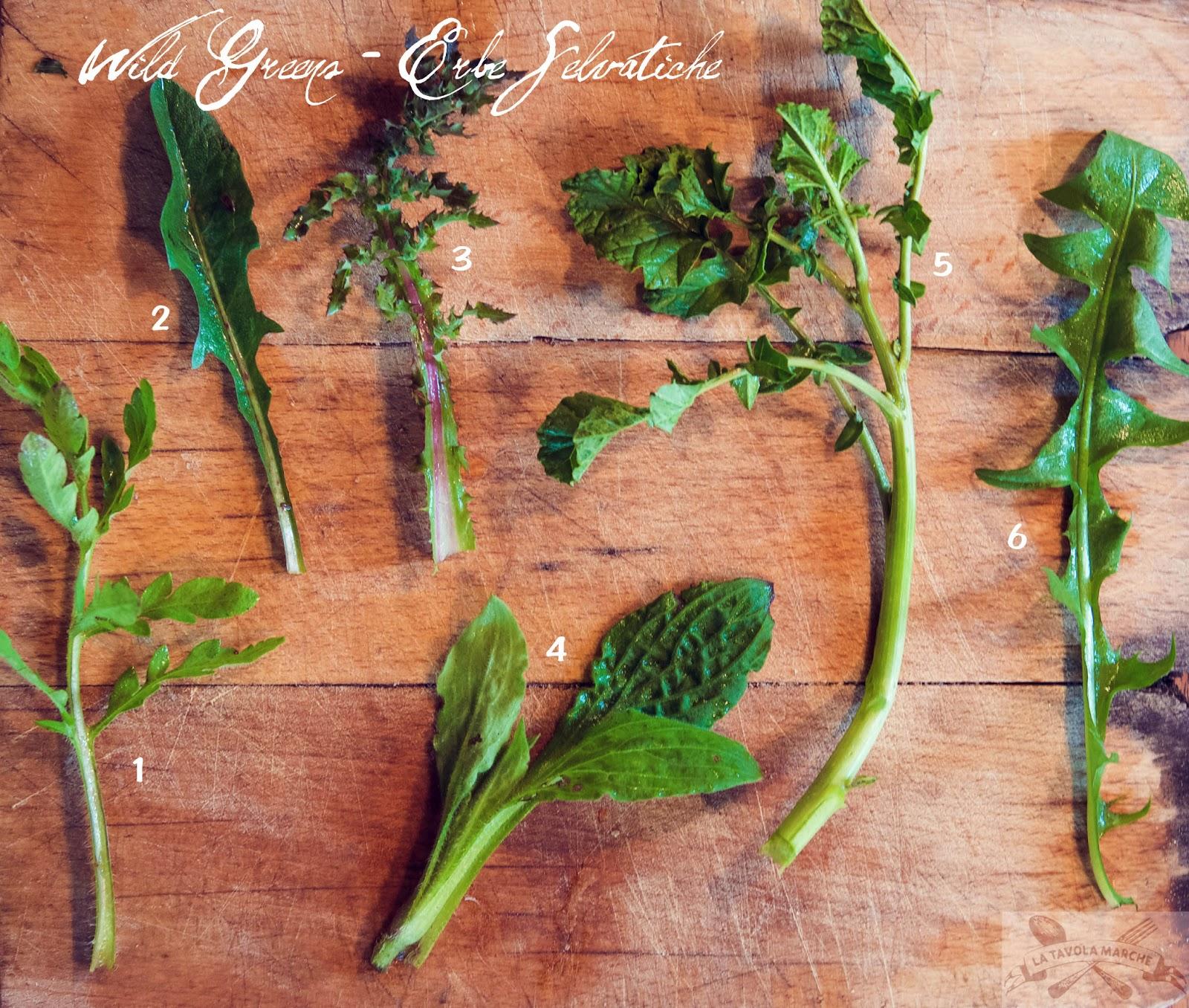 La Tavola Marche: Identifying & Eating Wild Greens