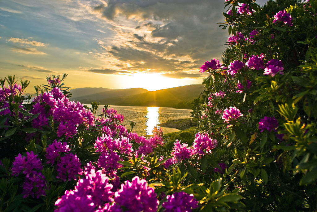 Beautiful flower wallpapers for you september 2012 sunset spring flower wallpaper mightylinksfo