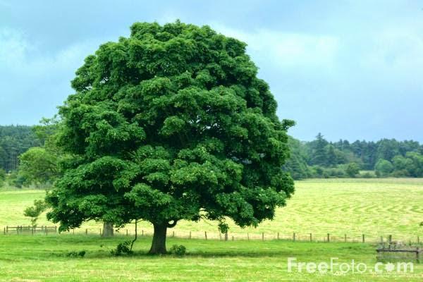 Filosofi Pohon: Kumpulan Pelajaran Hidup dari Sebatang Pohon