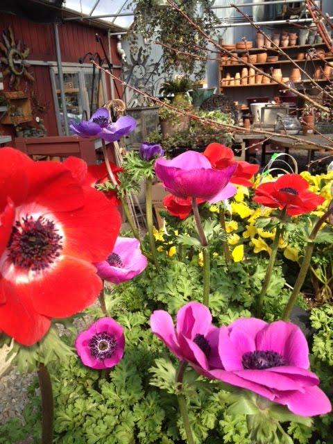 Copia Home & Garden