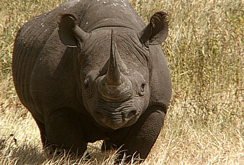 BLACK RHINO CLOSE