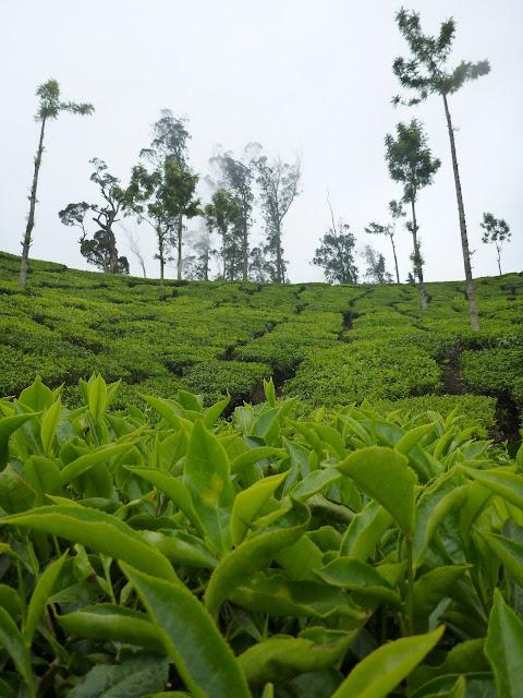 Indie: zielono mi :)