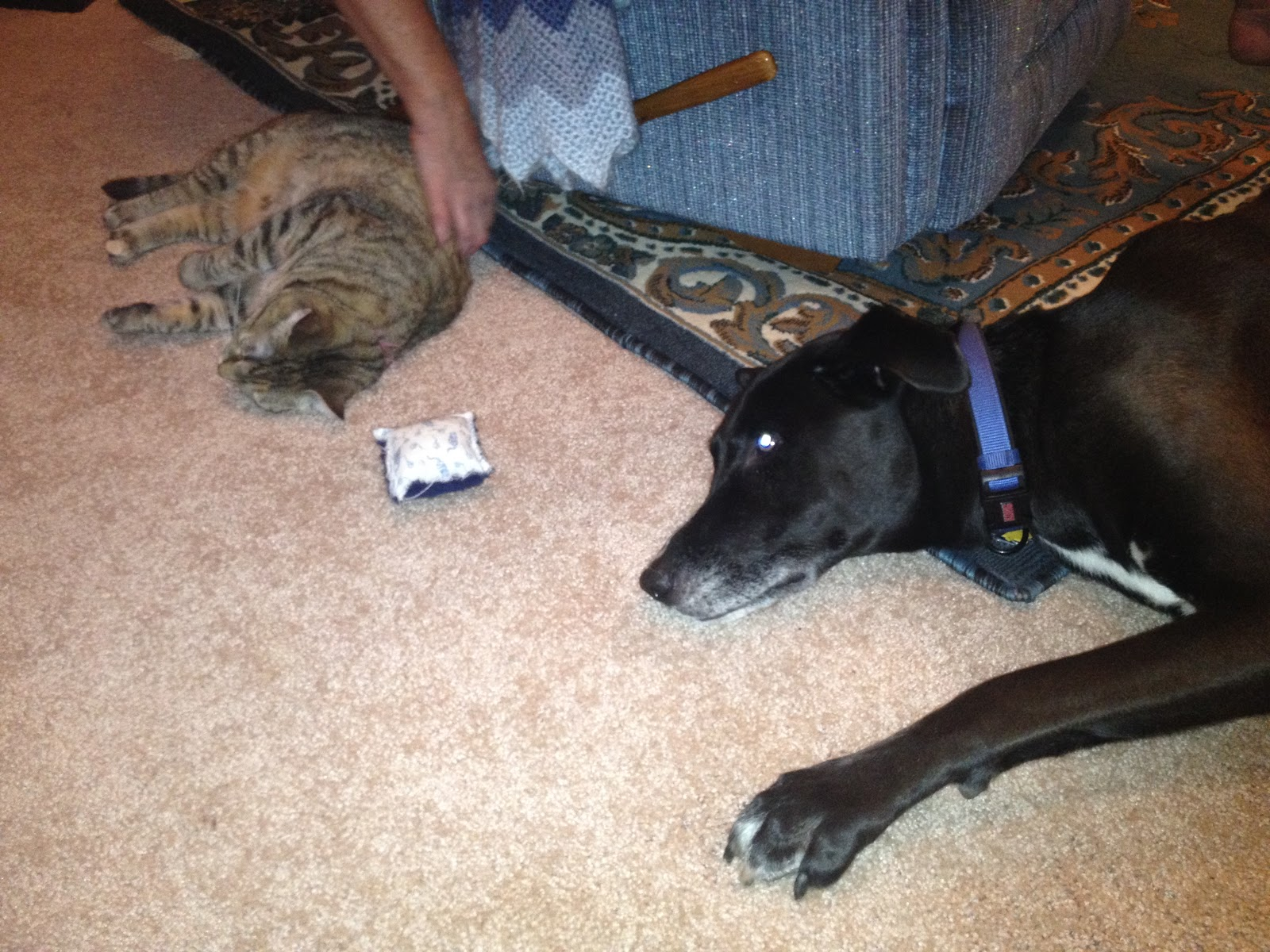 Can Catnip Harm Dogs