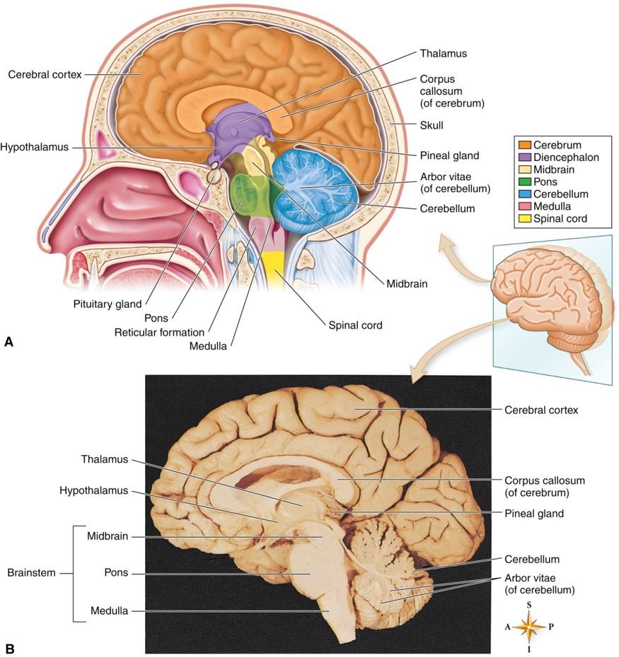 aampp chapter 8 nervous system