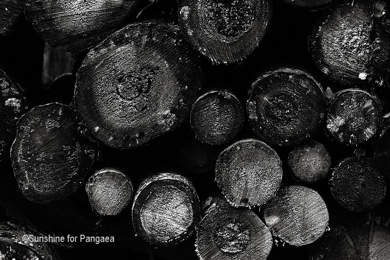 Old wood black and white photography