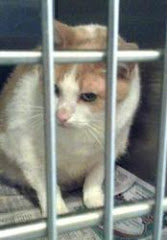 9/24/12 Owner&#39;s Boyfriend Allergic to Cat. Cat IS IN KILL SHELTER AND IS URGENT.