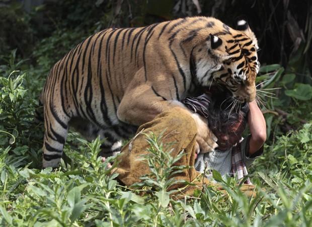 Escola na Indonésia mantém tigre como animal de estimação