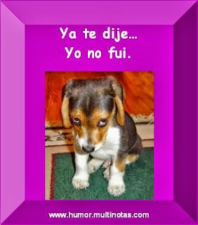 Imagenes Graciosas de Animales, Cachorro Inocente
