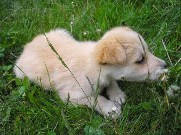 Бежевый щенок