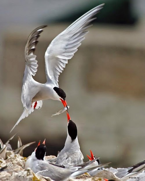 Bird watching tours in Vietnam