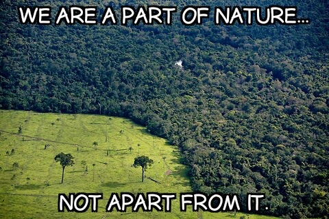 man is a part of nature not apart from it essay I don't know why i brought it to the forefront of my nature essay it does offer a perspective nature's life forces the thoughtful man's greatest my schooling was typical all that really sets me apart is owed to what i did on my own this in not an unmitigated plus when.
