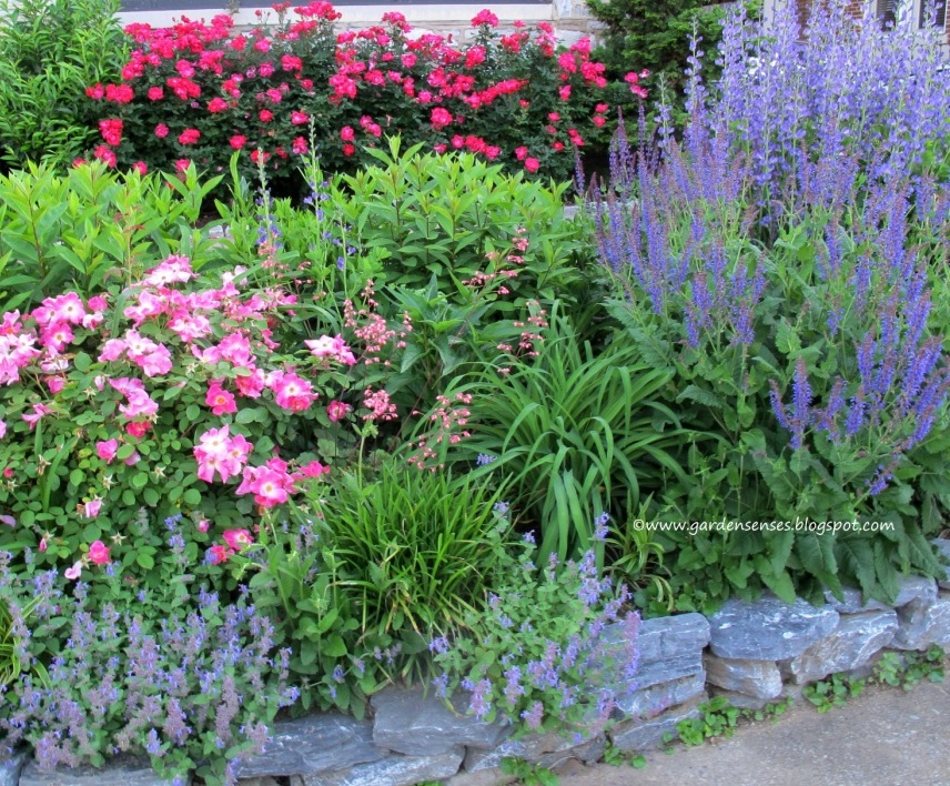 136726538660172320 as well Low Maintenance Landscaping Low Maintenance Garden Ideas Front Yard together with Spring  binations Ii together with 406309197607389697 together with A Tour Of The Chartreuse House Garden. on drought tolerant front yard landscaping ideas