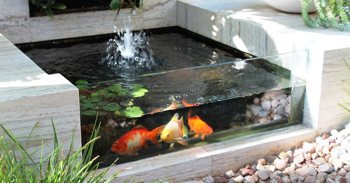 Modern backyard small fish pond ideas backyard design ideas for Contemporary koi pond design