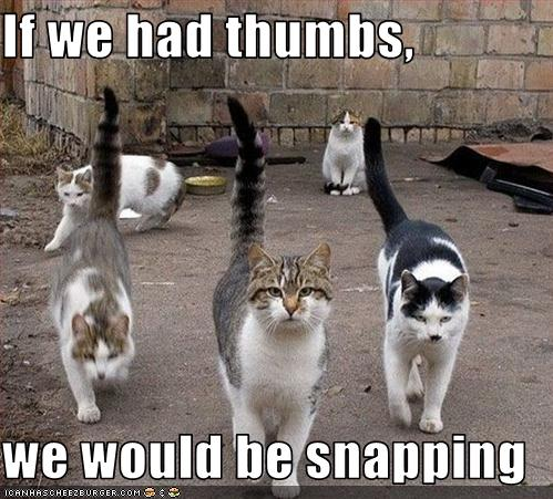 Funny cats With Captions 2012 | Funny World