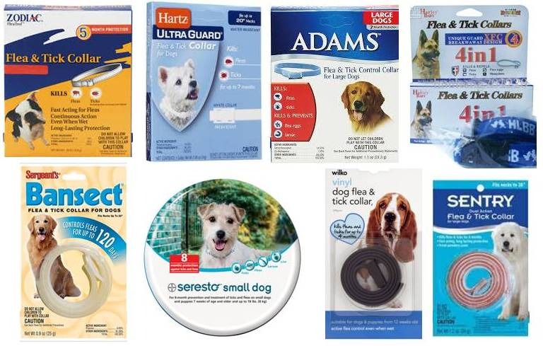 Best Natural Worm And Flea Treatment For Dogs