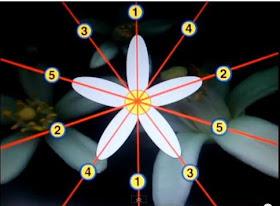 Simetría en la naturaleza