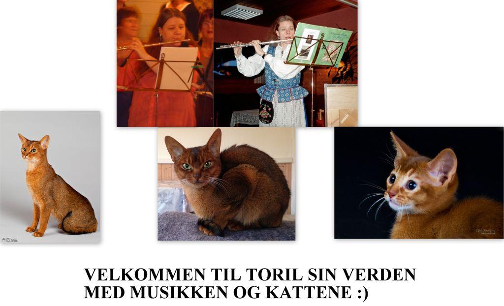 Toril sin hverdagsblogg med musikken og kattene