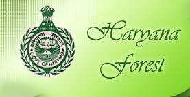 Haryana Forest Department Forest Guard Online Application Form 2013
