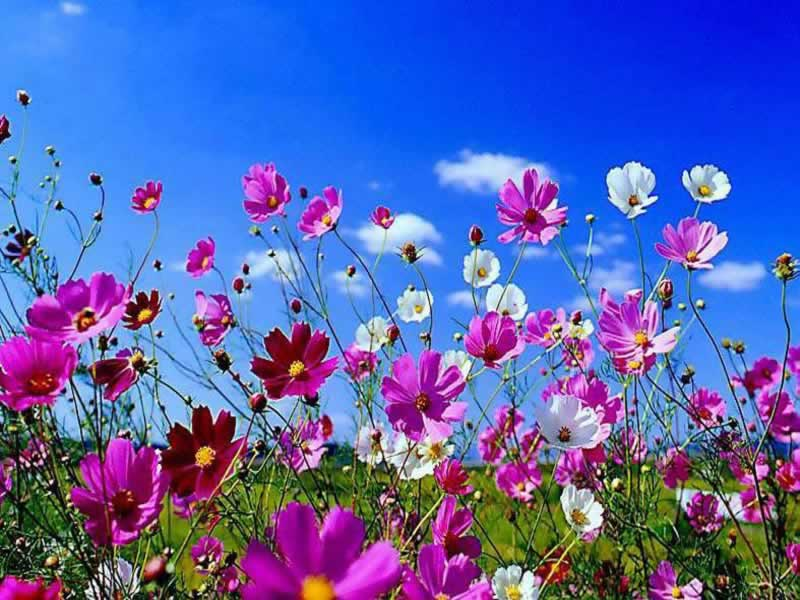 Beautiful Spring Flowers Desktop Wallpaper