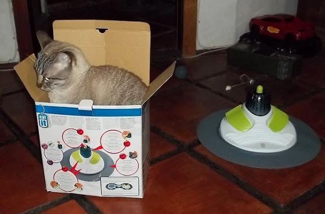 Cat It Design Senses Massage Center