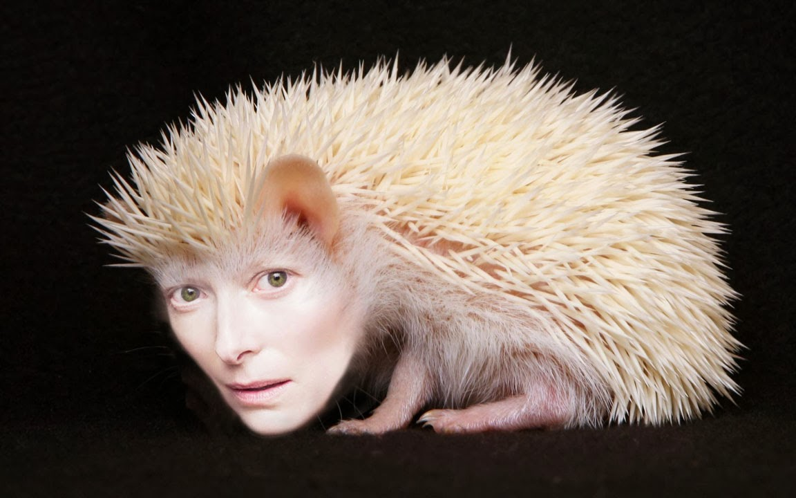 tilda-swinton-animal, tilda-swinton-pale, tilda-swinton-face, tilda-swinton-skin