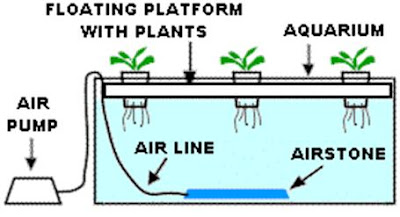 tanaman2hidroponik
