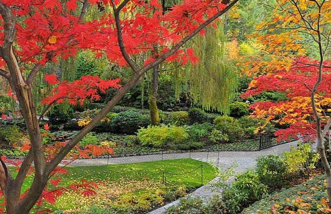 paisagem com árvores com folhas vermelhas e amarelas e plantas