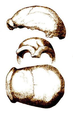Descubren que el neandertal ya dividía el trabajo por sexos