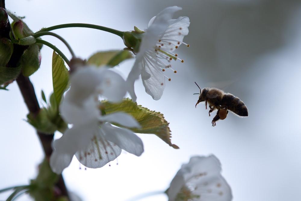 Friederike: Wie das Nähen zu den Bienen kam