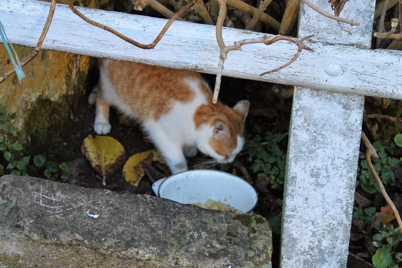 Gato, Cat, Ilove cat