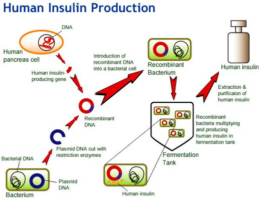 Doshti Produce Insulin Naturally