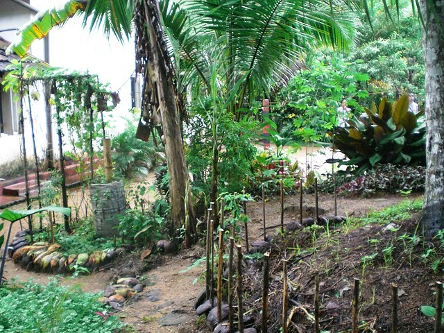 La via campesina south asia sri lanka and home gardening for Garden designs sri lanka