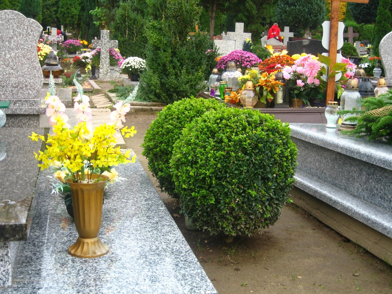 Zielony Antajos Prawo A Rosliny Na Cmentarzu