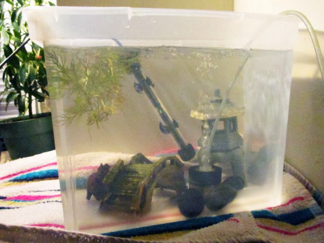 How often wc to keep my qt tank clean for How often should you clean a fish tank