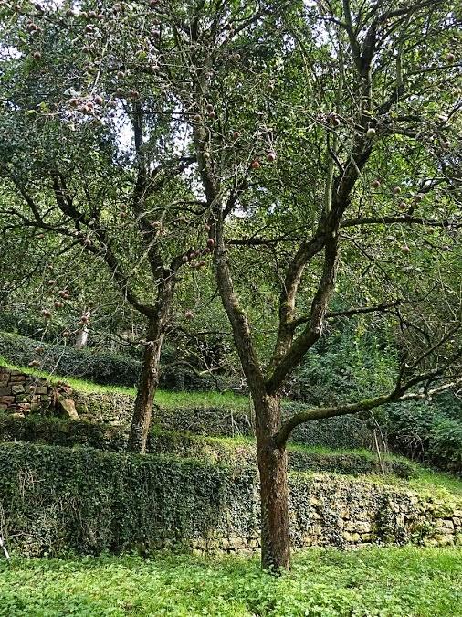 مناظر طبيعية: صور أشجار متنوعة - Landscapes: Pictures of a variety of trees