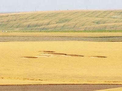 Corak lingkaran misteri di ladang gandum Wilbur itu dikatakan kelihatan seperti telinga watak animasi, Mickey Mouse.