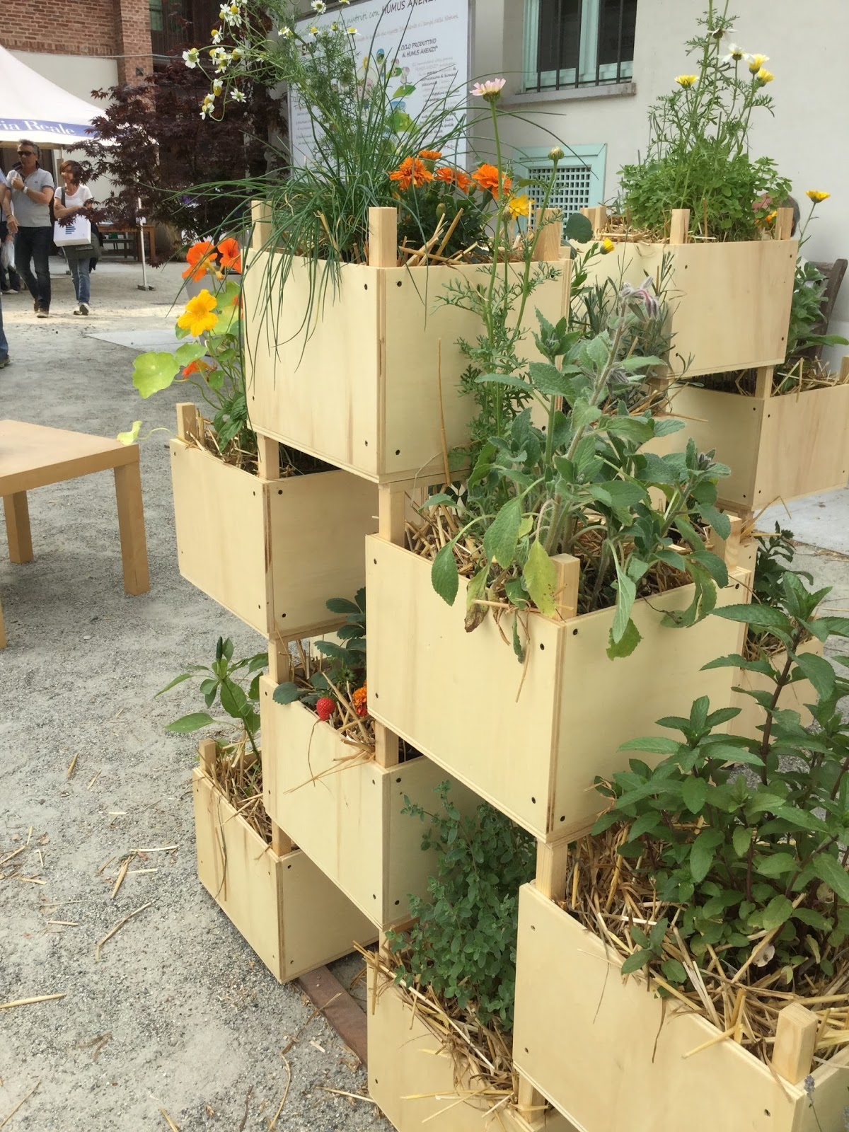 Separe 39 vegetale sfumature verdi for Contenitori da giardino