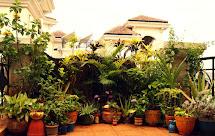 Balcony Garden Design Ideas India
