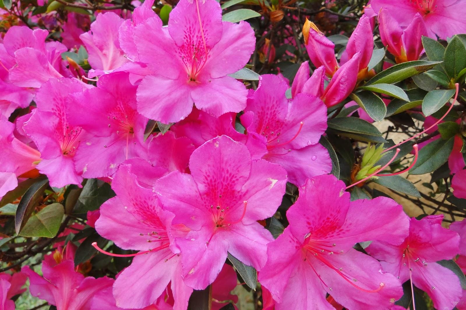 flores para jardim que aguentam solsolar quando não estão floridas