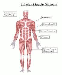 Myositis: The Basics - Myositis Support and Understanding