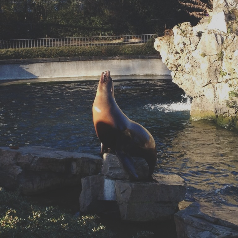 Kölner Zoo, Köln, Zoo, Seehund, Frollein Pfau