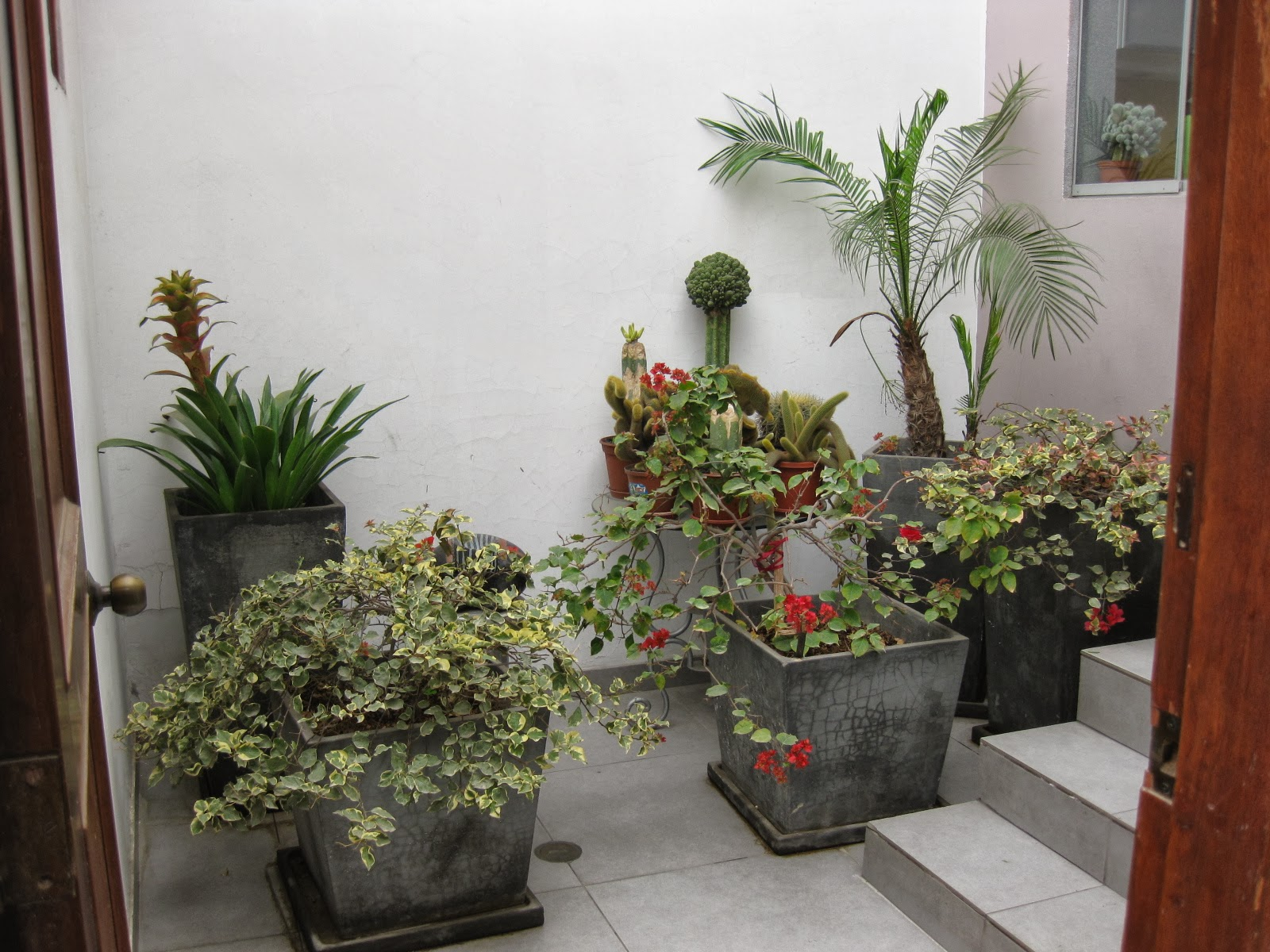 Jardineros especialistas delivery plantas oficinas for 5 plantas decorativas