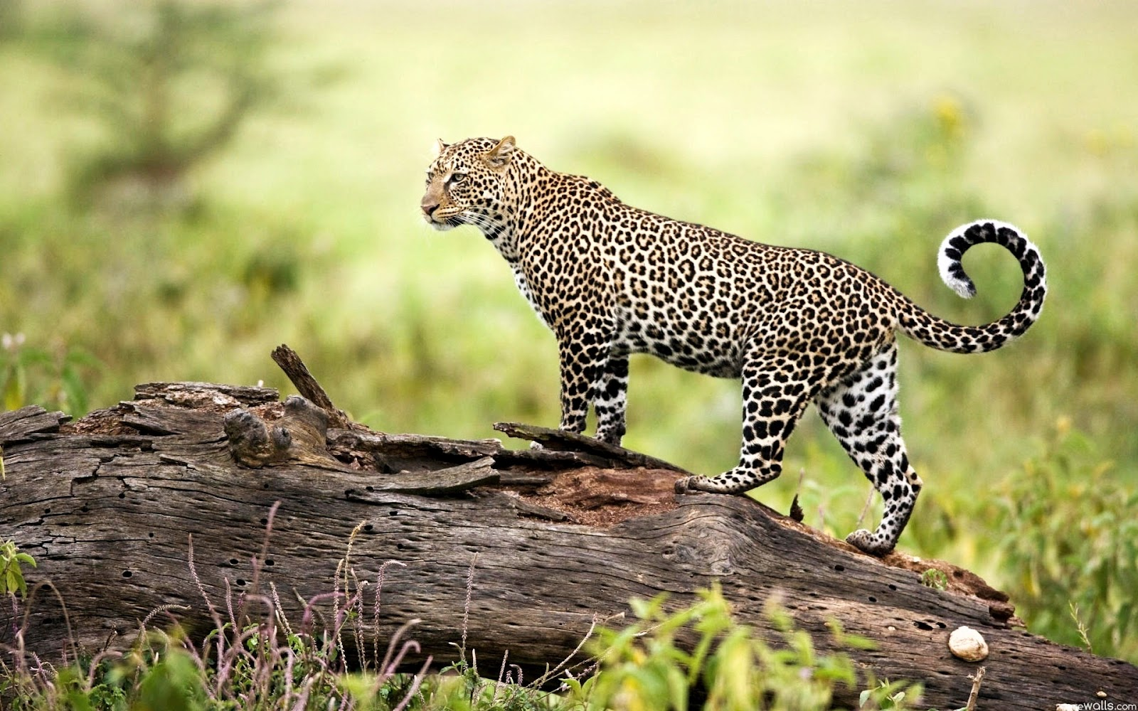 wildlife wallpapers hd | My HD Animals