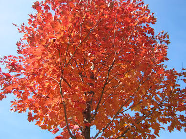 Crimson Maple Against the Blue Autumn Sky
