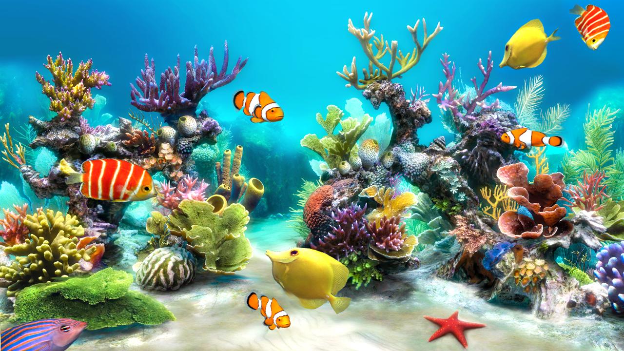 Live 3D Fish Aquarium